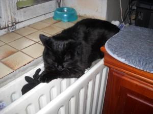 Praline sur le radiateur