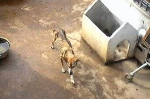 Un chien d'une maigreur extrême découvert à Herminis.