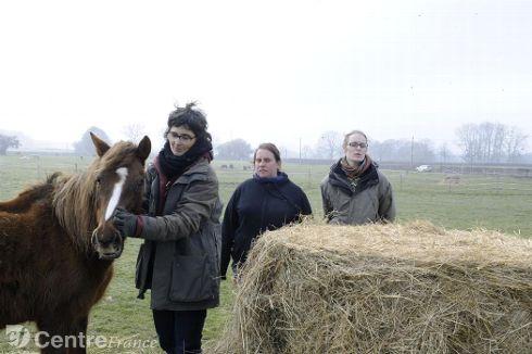 Les animaux  survivants avaient été recueillis par des associations. - Archives Michèle Delpy